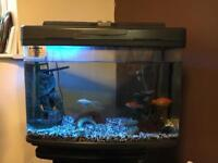 fishes and tank available