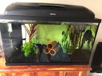 Tropical fish tank with accessories and fish