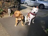 Dog trainer, walker and adviser