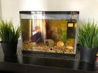 Fish tank and fish 🐠