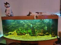 Juwel Vision 450 l fish tank