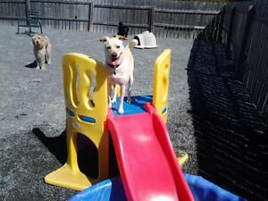 Doggy Daycare and Kennel-Free Boarding Services St. John's Newfoundland image 5