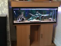 Fish Tank, Fish and Accessories for Sale