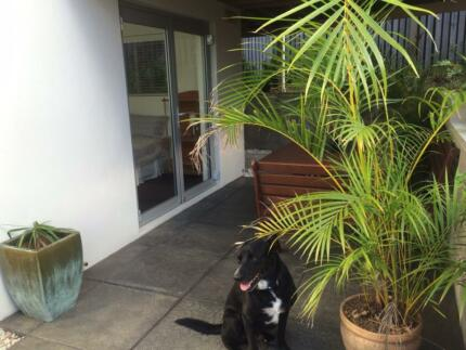 Modern Noosa beachside accomodation at an affordable price! Sunshine Beach Noosa Area Preview