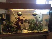 Juwel 125l fish tank and Aqua one cabinet