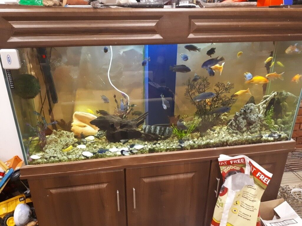 Large Fish Tank And