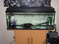 Tank and stand, fish and everything included