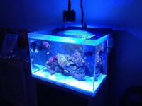 Marine Tank for sale Fluval M60 sea reef + cabinet