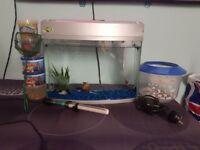 Fish aqurium setup