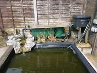 Full pond set including 15 fishes