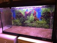 130L aquarium