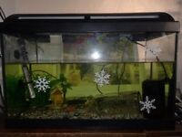 Fish tank with a little fish