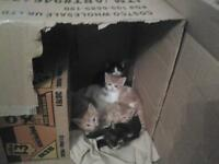 kittens for sale newport