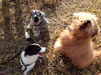 SmartPaws Dog Training and Dog Walking