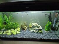 Large black 200L tropical ready fish tank with full setup