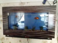 Wall mounted Fish Tank with pump and filter & 2 fish