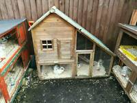 Rabbits and cages for sale