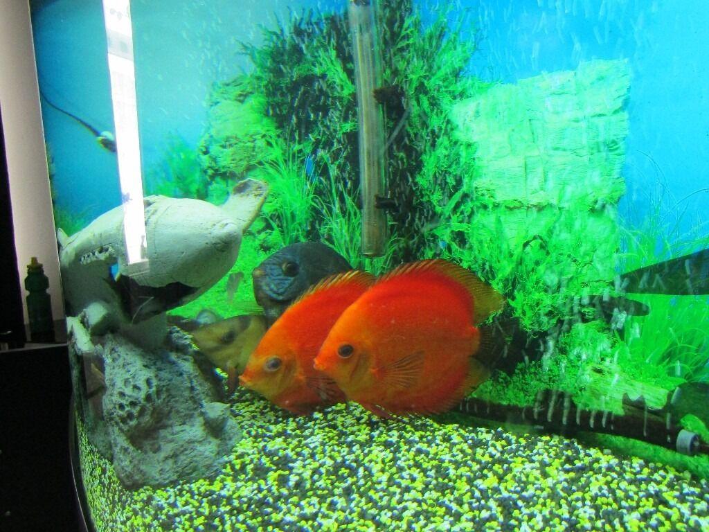 Fish aquarium for sale in pakistan - Image 1 Of 7