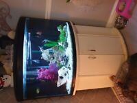 Big fish tank with everything