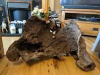 Massive piece of bogwood