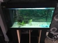 Fishtank full setup