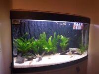 Fluval Venezia 180L aquarium + Cabinet + Fishes + Equipment + Spares + Chemicals