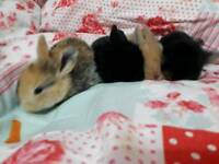 Baby house rabbits need loving homes