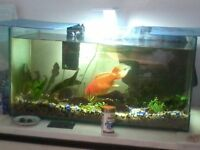 2ft Fish Tank Leamington
