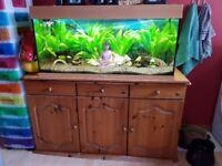 4ft well established aquarium and fish