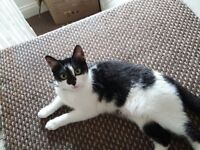 Intelligent, kind KITTEN CAT 9 MONTHS OLD FORSALE as moving