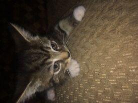 last Beautiful kitten