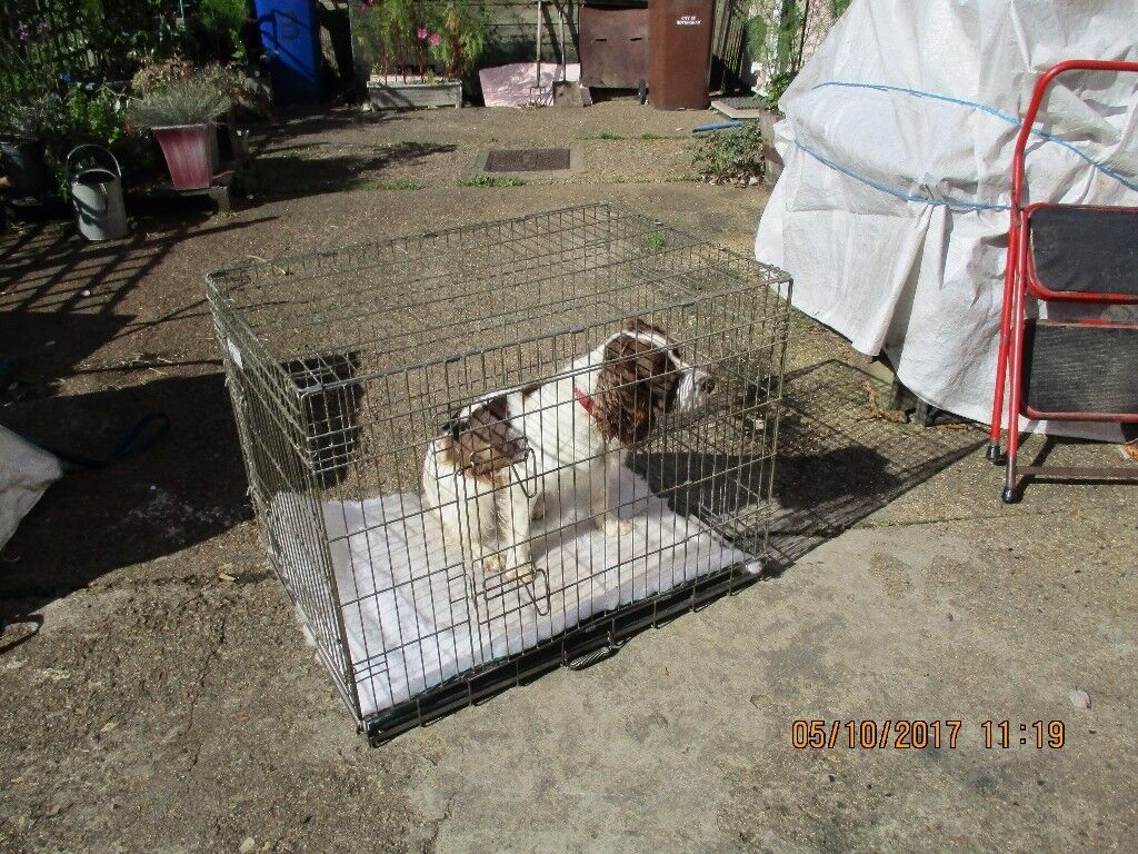 wire dog cage to suit fairly large dog in bury st edmunds
