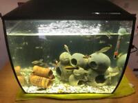 Fluval Flex LED aquarium