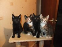 4 Adventurous, Playful Kittens looking for their forever home