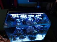 38 gallon innovative marine saltwater aquarium