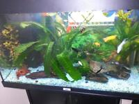 complete fish tank and fish for sale