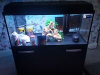 aquarium, hood, stand and accessories for sale