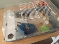 Free to collect Hamster with Cage and Ball