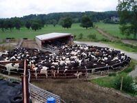 Head Herdsman Hay On Wye