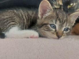 😻😻Adorable tabby kitten to be rehomed❤💙