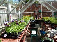 eden full pane greenhouse.