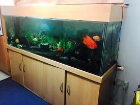 6ft long fish tank