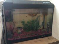 Fish tank with 5 fish - Ready to go - £30 ONO