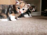 2 beautiful kittens