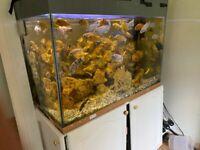 Malawi Fish tank plenty of fish