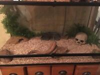 Vivarium Snake/Reptile Set Up