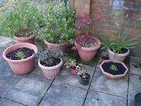 Bundle of Garden Plants