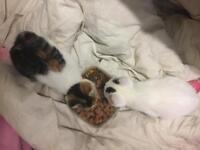 Super sweet and playful kittens 8wks £165 each