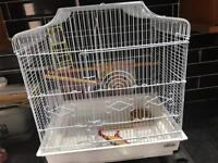 Budgie cage accessories and food