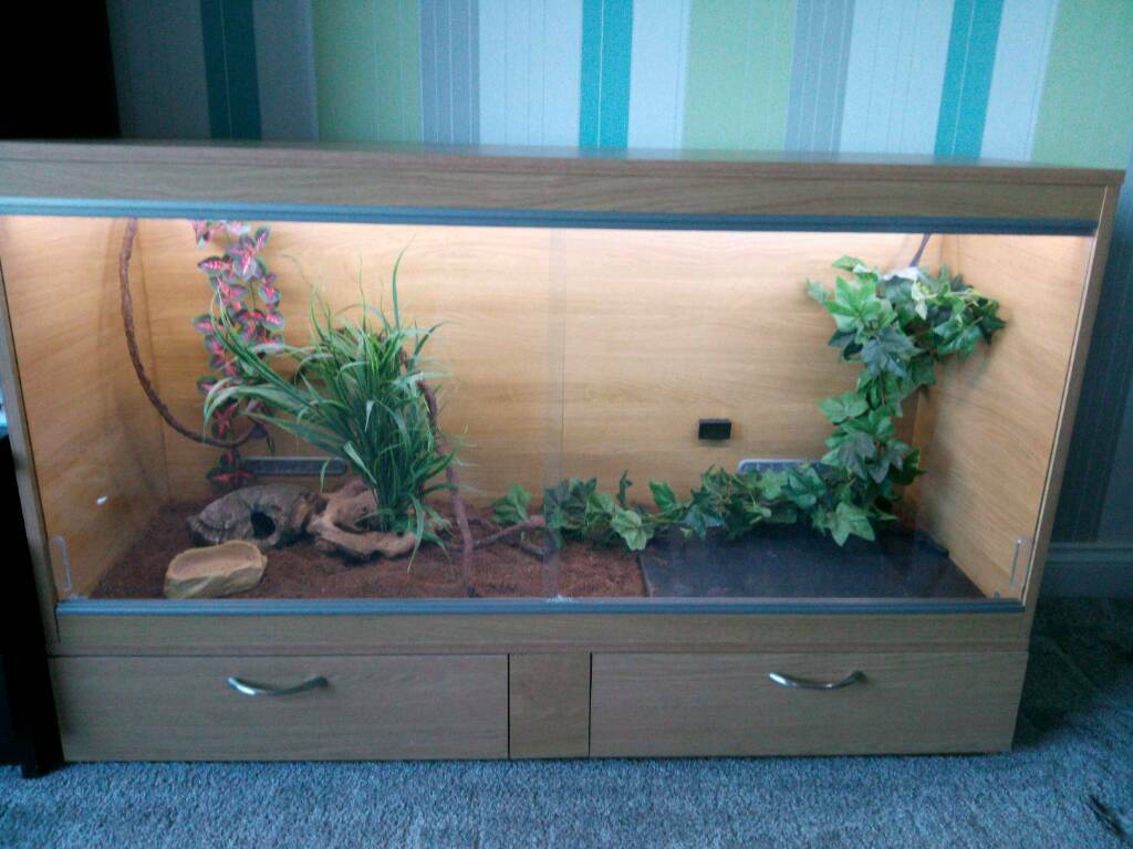 Reptile vivarium full set up snake tank